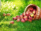 Яблочный спас - праздник