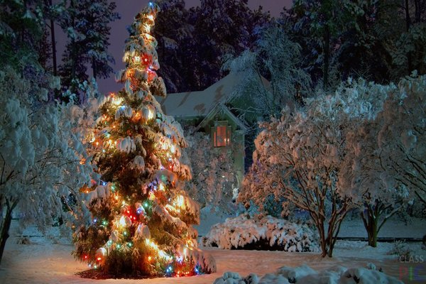 украсить елку на улице