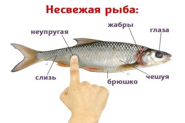 признаки несвежей рыбы