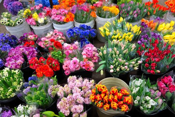 разнообразие свежих цветов