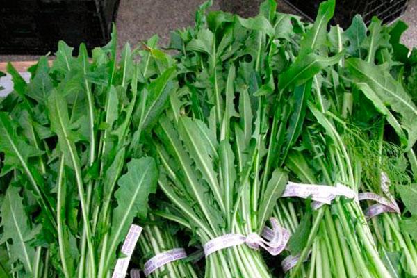 Салат с крапивой - 5 полезных и очень вкусных рецептов приготовления