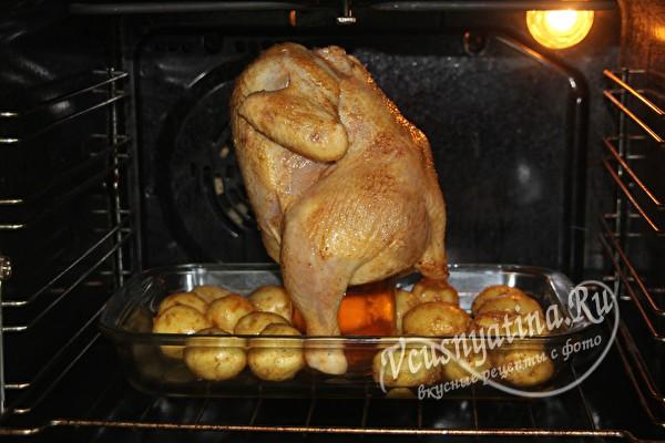 Курица в банке картинки