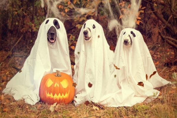 Какого числа Хэллоуин в 2020 году в России - что за праздник, его история и традиции празднования