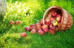 Миниатюра к статье Яблочный Спас — когда ждать праздник в 2019 году и что означает